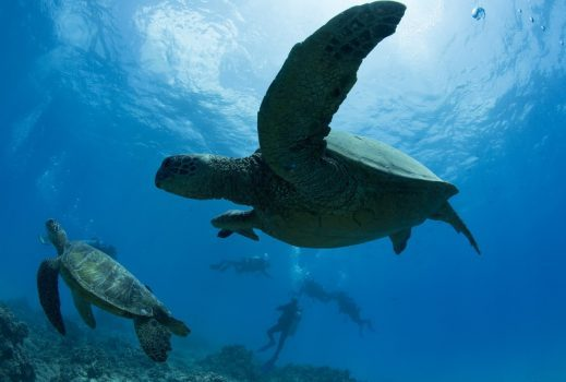 Scuba diving in north shore oahu a divers paradise for Plenty of fish oahu