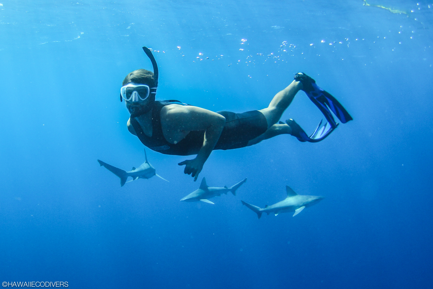Shark Cage Diving Hawaii With Hawaii Eco Divers