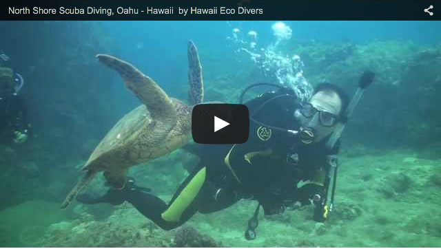 North Shore Scuba Diving, Oahu – Hawaii by Hawaii Eco Divers