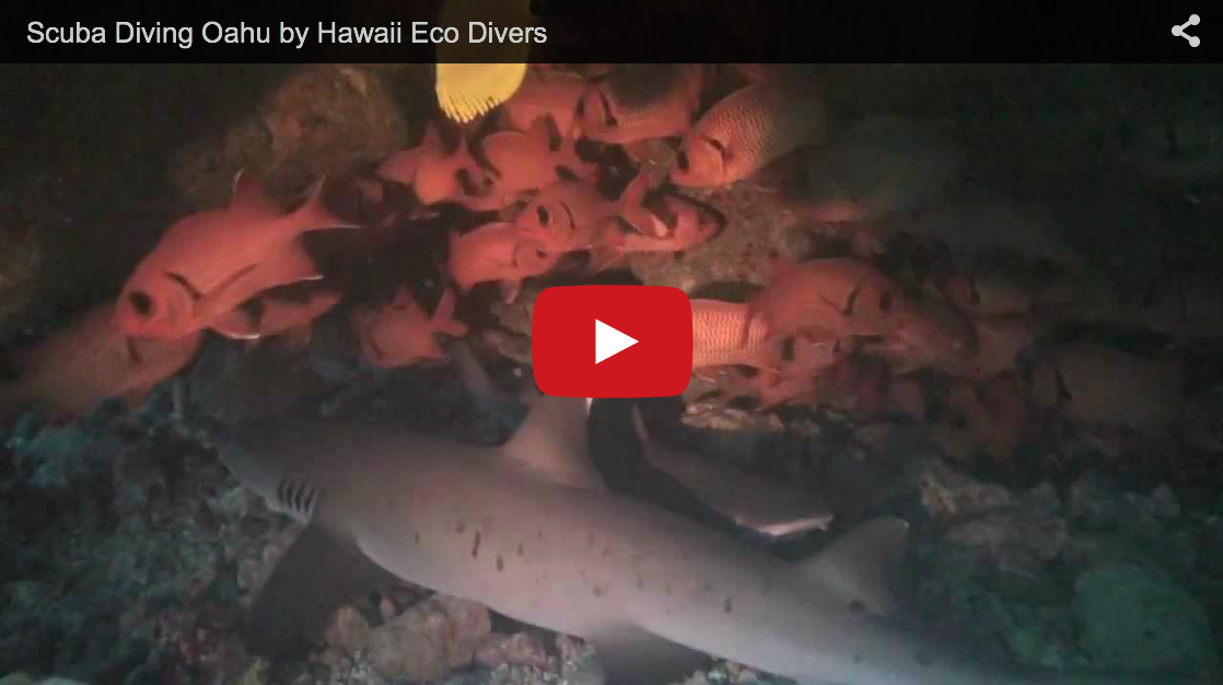 Video: Scuba Diving in Oahu