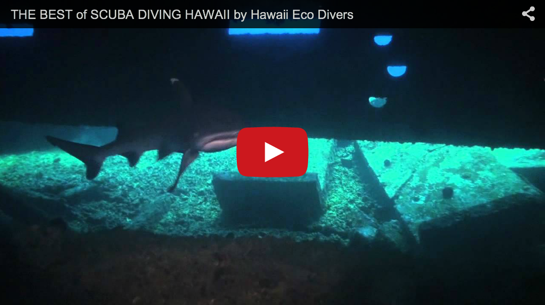 THE BEST of SCUBA DIVING HAWAII
