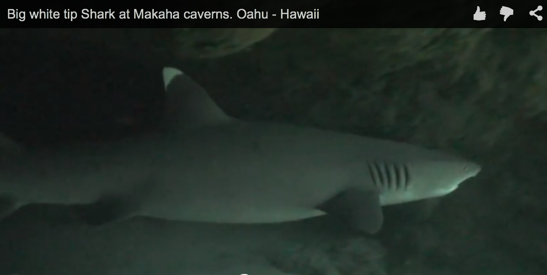 Big white tip Shark at Makaha caverns