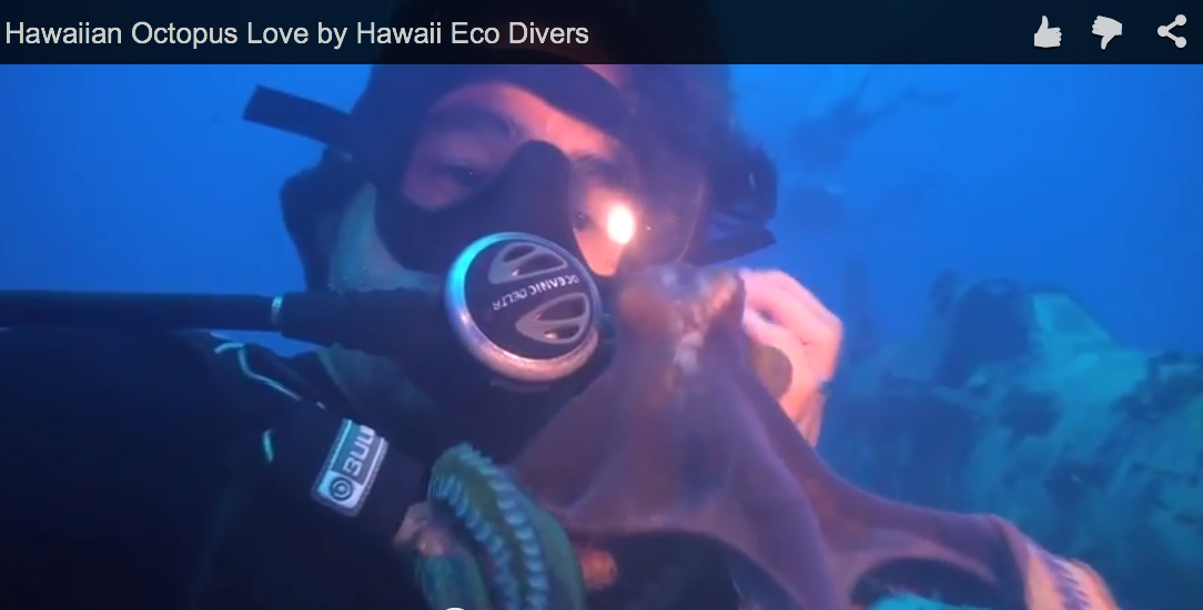Hawaiian Octopus Love
