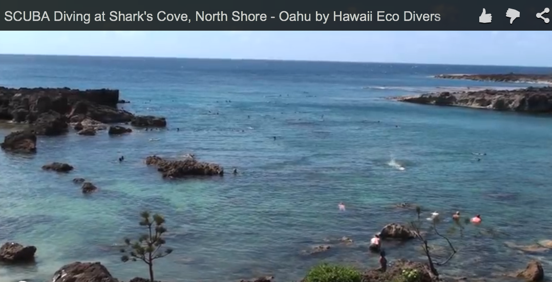 SCUBA Diving at Shark's Cove, North Shore – Oahu