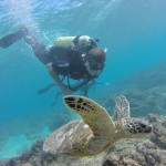 Oahu Scuba Diving Reservations & Bookings