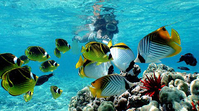 Eco-friendly Oahu Snorkel Tours in Honolulu, swim with the sea creatures and turtles near Waikiki off a chartered boat.