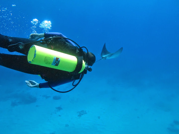 Dives for beginners in Hawaii