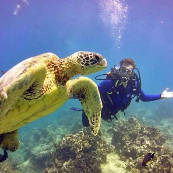 Scuba diver with sea turtle, Oahu, Hawaii