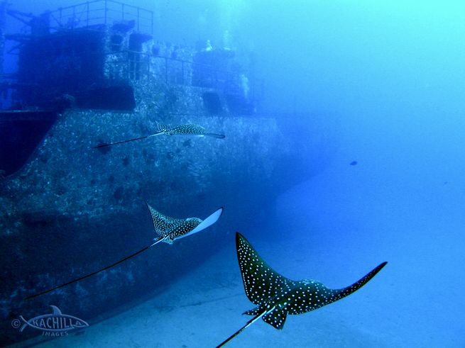 Sea Tiger Wreck - Scuba Diving Oahu Essential Dive Sites
