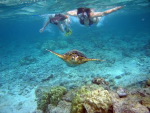Turtle Bay Snorkel and scuba dive oahu