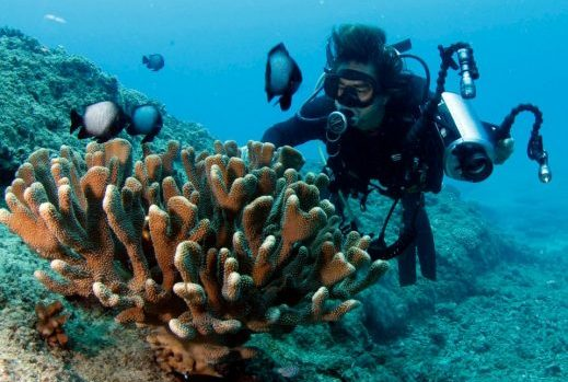 two tank dive discover scuba dive coral and fish with Hawaii Eco Divers
