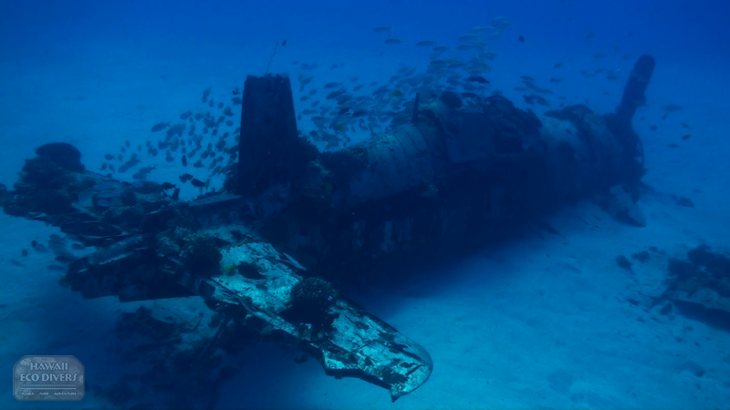 Carsair, one of the best south shore dive sites on Oahu