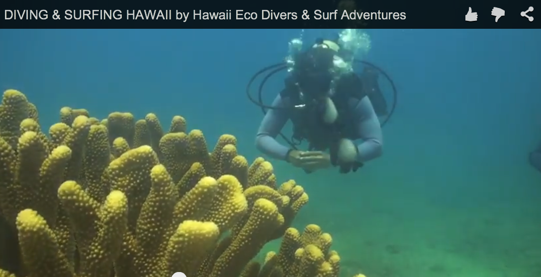 DIVING & SURFING HAWAII