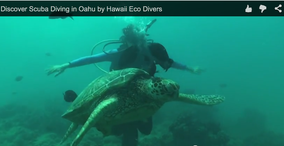 Discover Scuba Diving in Oahu by Hawaii Eco Divers