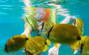 Oahu Snorkeling Tour with Hawaii Eco Divers on the North Shore of Oahu, Hawaii