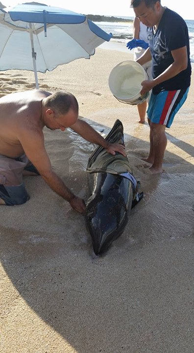 HED team member volunteers to help false killer whale
