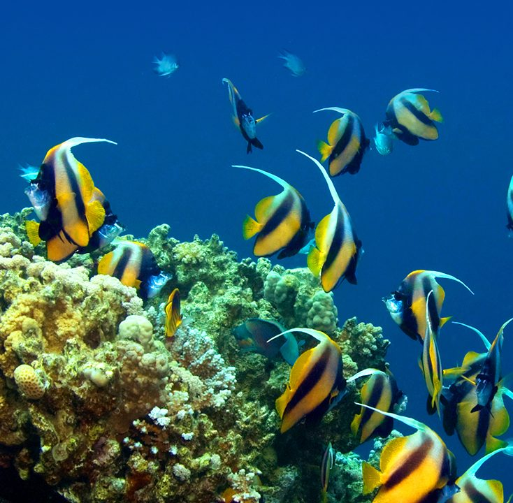 Reef fish and Marine Life from Scuba Diving in Hawaii